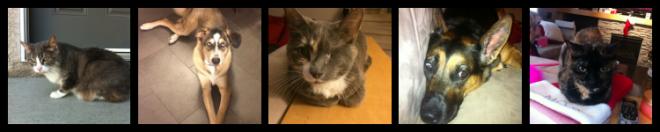 Tara pets for web