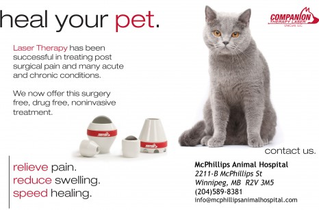 Heal Your Pet Laser Therapy Cat Ad