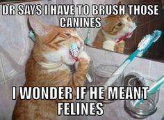 brush felines