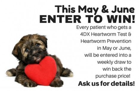 Heartworm Contest Website