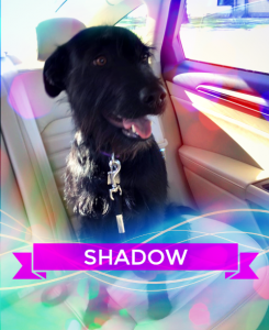 Shadow Desmarais
