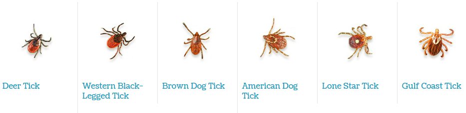 Tips on Preventing Tick Borne Diseases in Your Dog