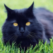 Thumbnail for Debunked! 6 Common Myths about Cats